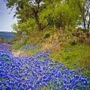 Bluebonnet Meadow Poster