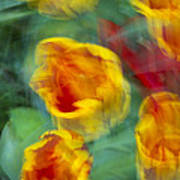 Blurred Tulips Poster
