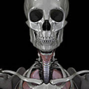 Bones Of The Head Poster