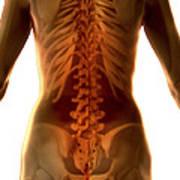 Bones Of The Upper Body Female Poster