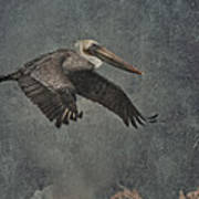Brown Pelican 2 Poster