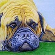 Bulldog Poster by Prashant Shah