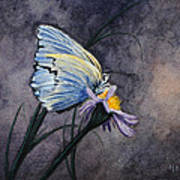 Butterfly Poster by Bob Hallmark