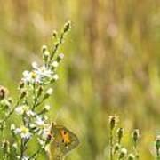 Butterfly In A Field Of Flowers Poster