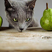 Cat And Pears Poster