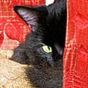 Cat Hiding Behind Drapes Poster
