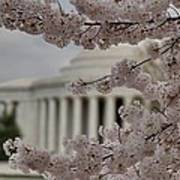 Cherry Blossoms With Jefferson Memorial - Washington Dc - 01133 Poster