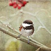 Chickadee In Winter Poster