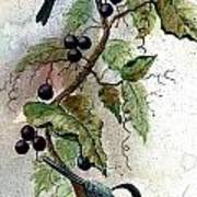 Chickadees And Blueberries Poster