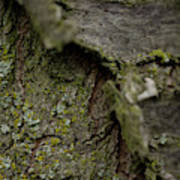Closeup Of Bark Covered In Lichen Poster