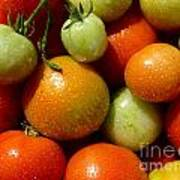 Closeup Of Ripening Fresh Tomatoes Poster