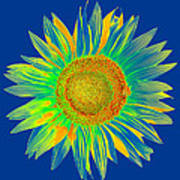 Colourful Sunflower Poster
