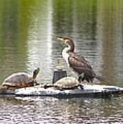 Cormorant And Turtle Duo Poster
