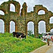 Cow By Second Century Aspendos Aqueduct-turkey Poster