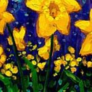 Dancing Daffodils Cropped  Poster