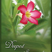 Deepest Sympathies Greeting Card Poster