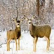 Deer In The Snowy Woods Poster
