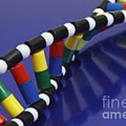 Dna Double Helix Poster