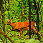Doe On The Move Poster