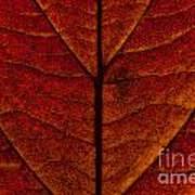 Dogwood Leaf Backlit Poster