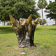 Dolphin Tree In Melbourne Beach Florida Poster