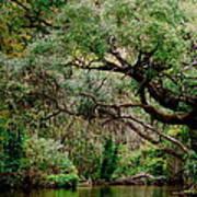 Dora Canal Tavares Florida Poster