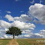 Dramatic Clouds And The Tree Poster