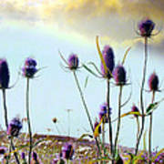 Dream Field Of Teasels Poster