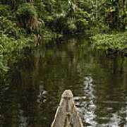 Dugout Canoe In Blackwater Stream Poster