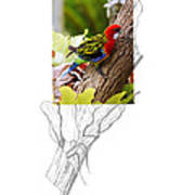 Eastern Rosella 2am-9396 Poster
