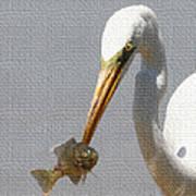 Egret Eats Fish Poster