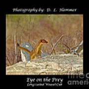 Eye On The Prey Poster