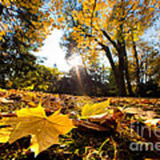 Fall Autumn Park. Falling Leaves Poster