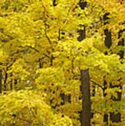 Fall Glory Poster