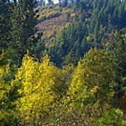 Fall In Spokane Poster