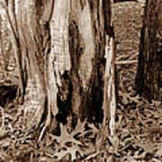 Fall Leaves V I Poster