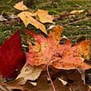Fall Moss Carpet Poster
