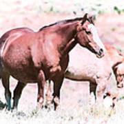 Family Of Horses Poster