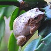 Fat Treefrog Poster