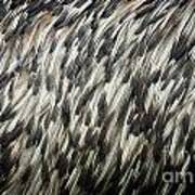 Feather Texture Poster