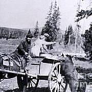 Feeding Bear Yellowstone National Park Poster