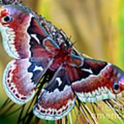 Female Promethea Moth Poster