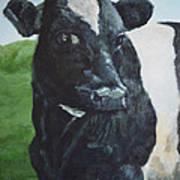 Flirtatious Cow Poster