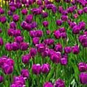 Floral Art Vi Poster