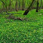 Floral Forest Floor Poster