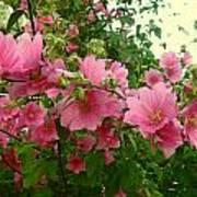 Floral Splash Poster