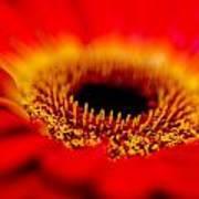 Flower Macro 1 Poster