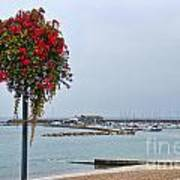 Flowers Along The Seafront Poster