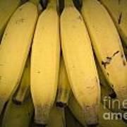 Fresh Bananas On A Street Fair In Brazil. Poster