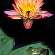 Frog And Waterlily Poster